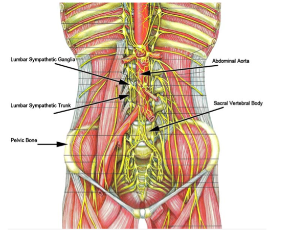 Lumbar Sympathetic Block Denver